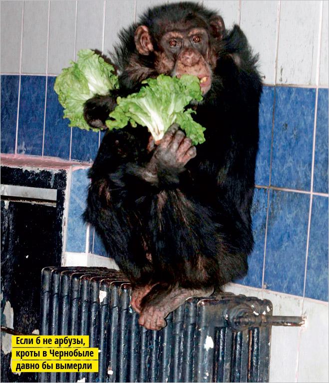 Фото №12 - Устроили из зоопарка цирк!