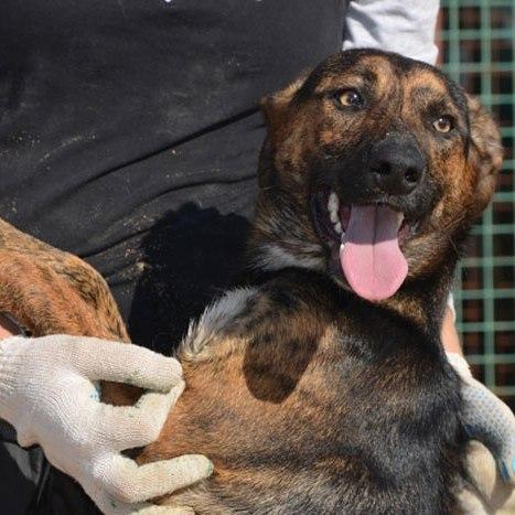 Фото №2 - Котопёс недели: возьми из приюта собаку Варю или кошку Полину