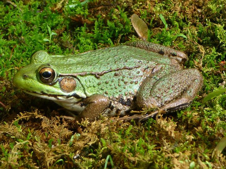 Фото №11 - 20 лучших фото жаб всех времен и народов!