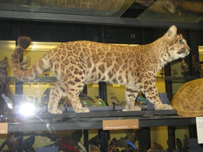 Фото №13 - 13 животных-гибридов, о существовании которых ты не подозревал