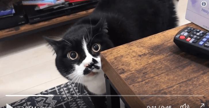Фото №1 - История «грузинского кота» и почему он запел