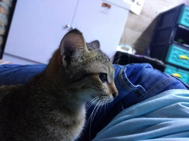 Фото №2 - Кот сгрыз наушники и принес за них хозяину необычный и пугающий подарок