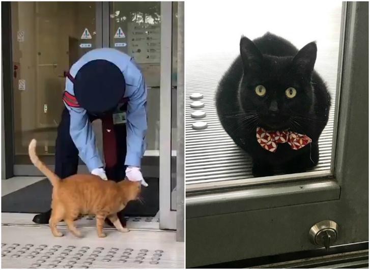 Фото №1 - Эпическая повесть о двух котах, которые уже два года пытаются проникнуть в музей
