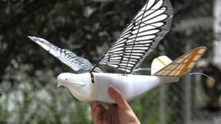 Китайцы изобрели дрон, который выглядит и летает как птица (ВИДЕО)