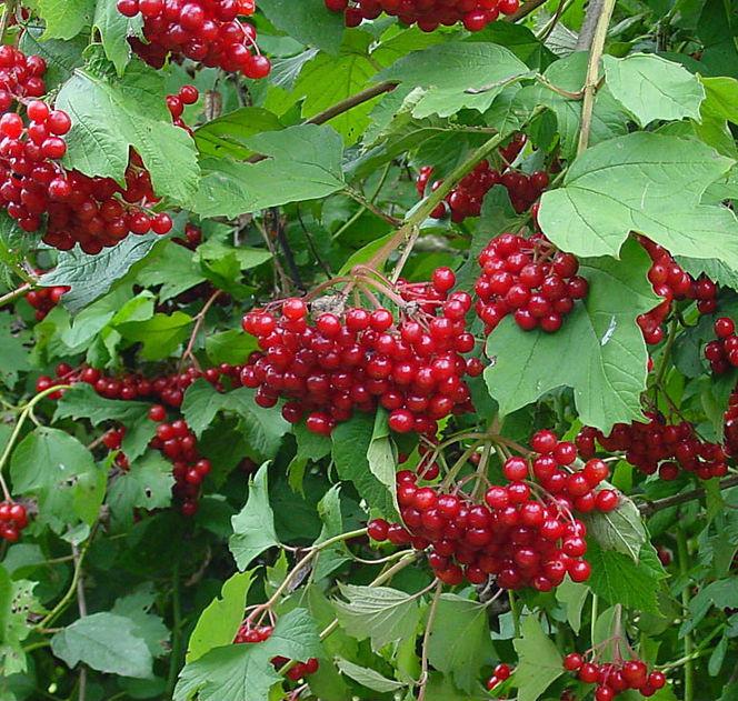 Как идеально запустить сад: 10 растений для самых ленивых садоводов!