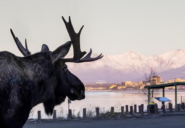 Фото №1 - В аду нужны хорошие стрелки (гонзо-репортаж из Аляски)