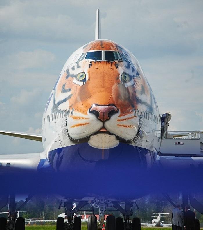 Фото №1 - Кто сказал, что тигры не летают?