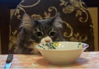 Настоящие коты снялись в клипе в честь своего праздника!