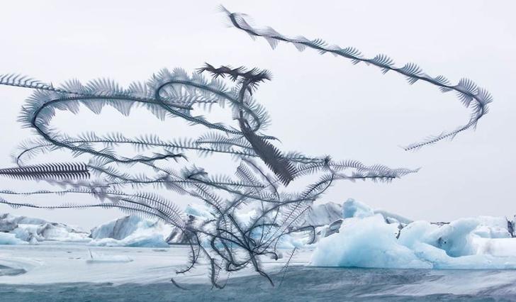 Фото №1 - Фотограф снимает траектории полетов птиц (галерея)