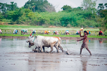 Фото №5 - Кто такие индийские неприкасаемые и можно ли их трогать