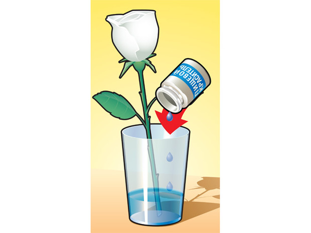 Перекрашиваем розу