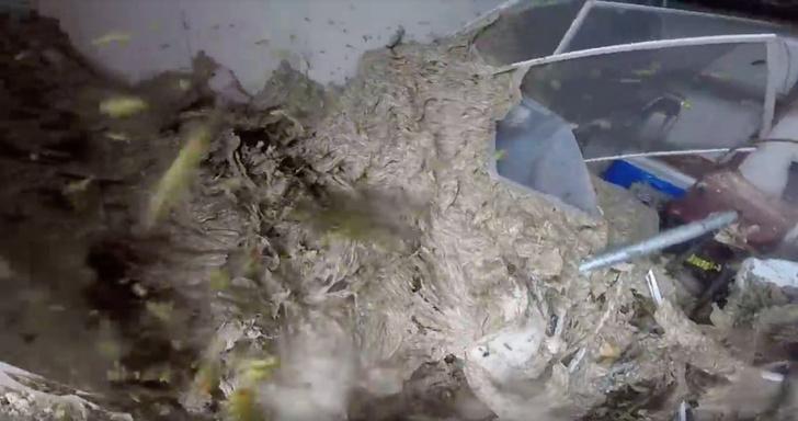 Фото №1 - На GoPro сняли разрушение гигантского улья (ВИДЕО)