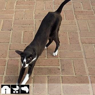 Фото №7 - Как выбрать домашнее животное в зависимости от типа твоего характера и размеров жилплощади