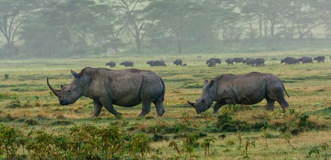 Покататься на носороге
