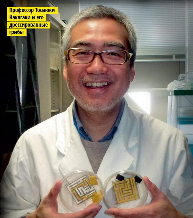 Фото №2 - Фунги сапиенс: почему грибы куда умнее и хитрее, чем мы думали