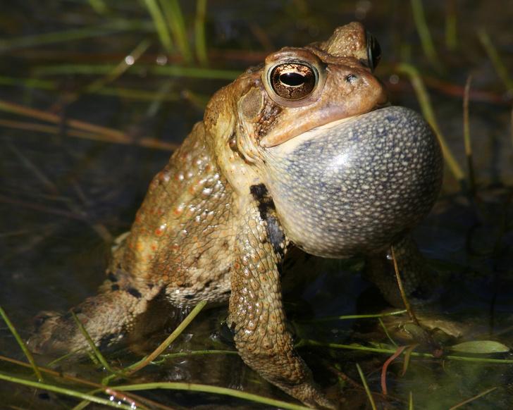 Фото №1 - 20 лучших фото жаб всех времен и народов!