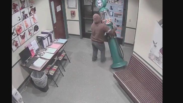 Фото №1 - Грабитель попытался украсть из приюта для животных аппарат с резиновыми мячиками (ВИДЕО)