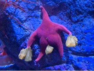 Выразительные «ягодицы» сделали морскую звезду звездой фотожаб