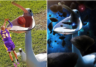Пеликан с бездонной пастью стал звездой фотожаб