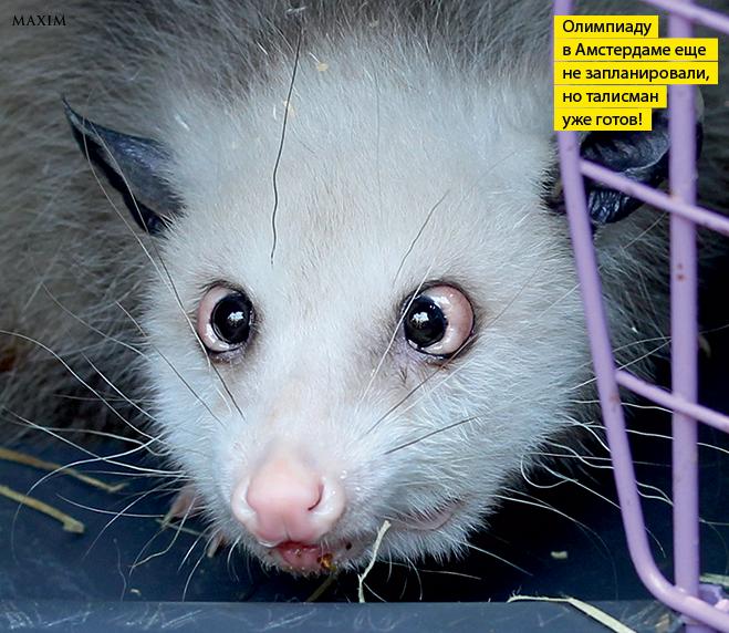 Фото №4 - Лики рыл. 10 фотографий, на которых животные строят рожи