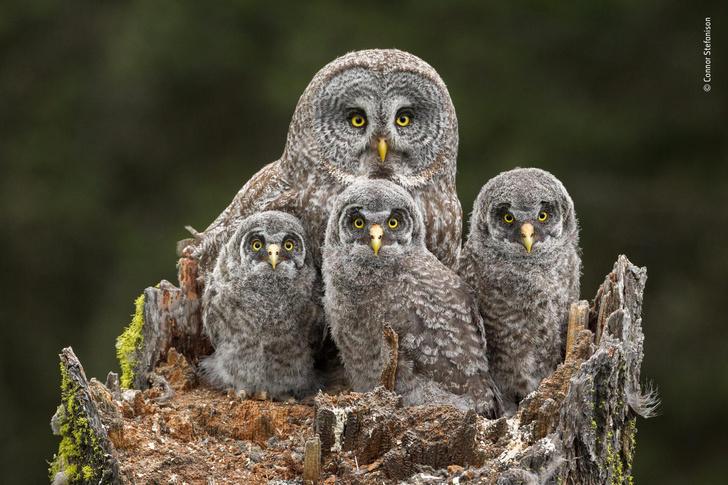 Фото №1 - Конкурс фотографии семейных снимков животных (галерея)