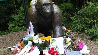 Илон Маск прочитал рэп про убитую обезьяну