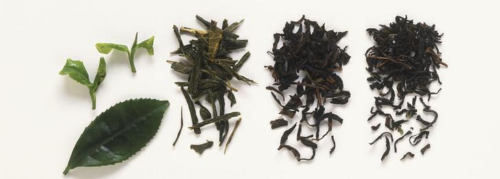 Фото №3 - Как приготовить правильный чай