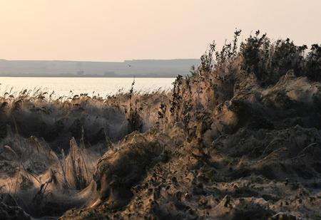 Колония пауков в Греции накрыла паутиной квадратный километр земли (галерея)