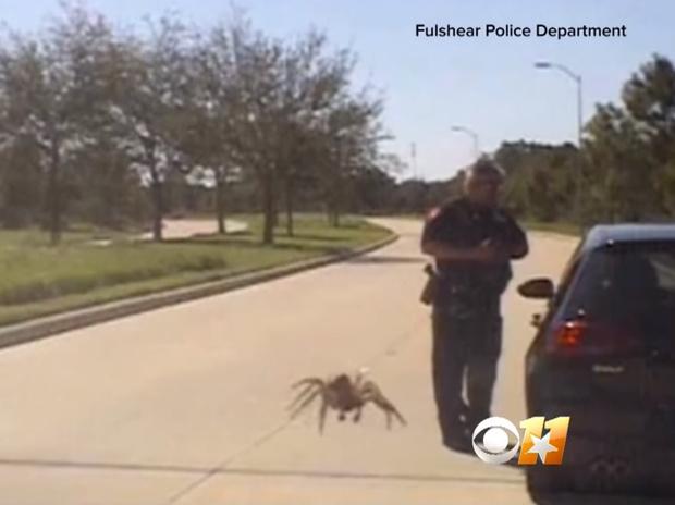 Фото №1 - Оптическая иллюзия: гигантский паук ползет к полицейскому (видео)
