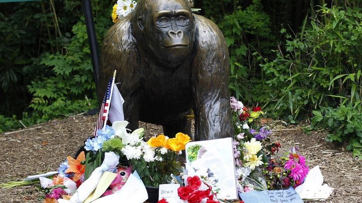 Фото №1 - Илон Маск прочитал рэп про убитую обезьяну