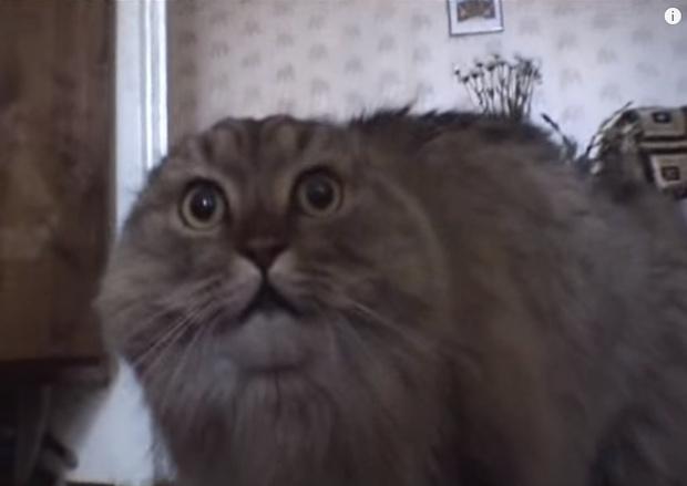 Фото №1 - Умер один из самых популярных интернет-котов, который говорил «NONONONO!»