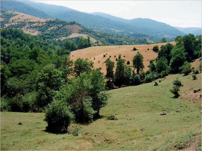 Заповедник в Талышских горах с гирканской флорой
