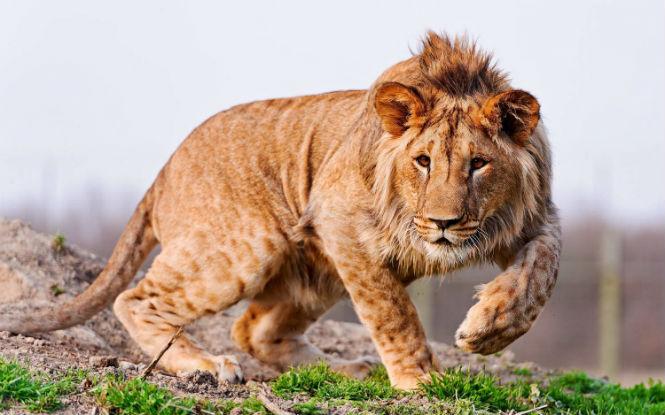 Фото №4 - 13 животных-гибридов, о существовании которых ты не подозревал