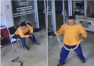 Мужчина, пришедший в полицию подать заявление, попутно обезвредил змею (бесстрашное видео)