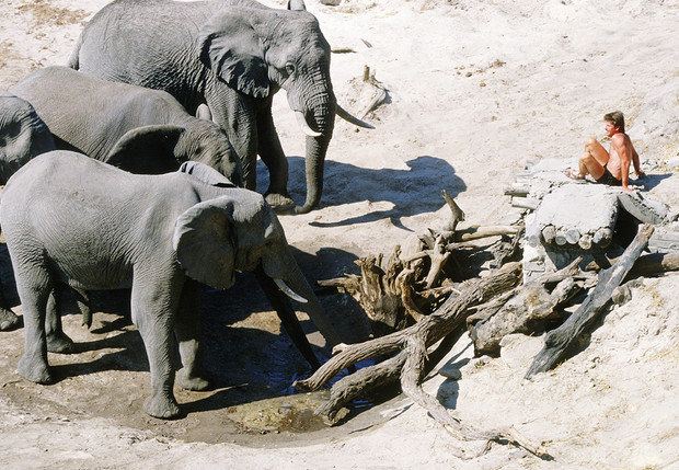 Фото №1 - Как отогнать собаку, осу, слона и прочую живую природу