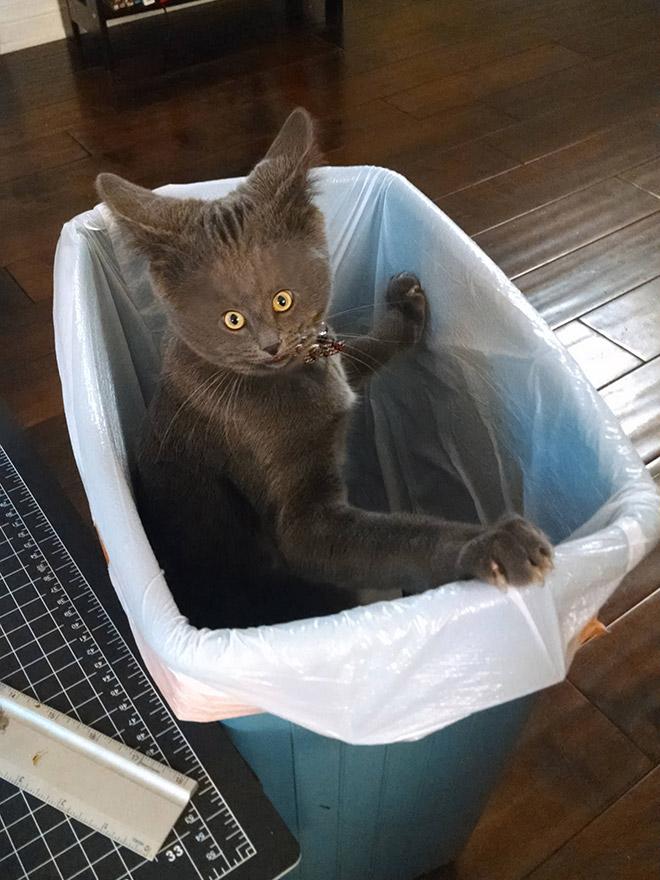 Фото №12 - Коты с крошечными мордами!