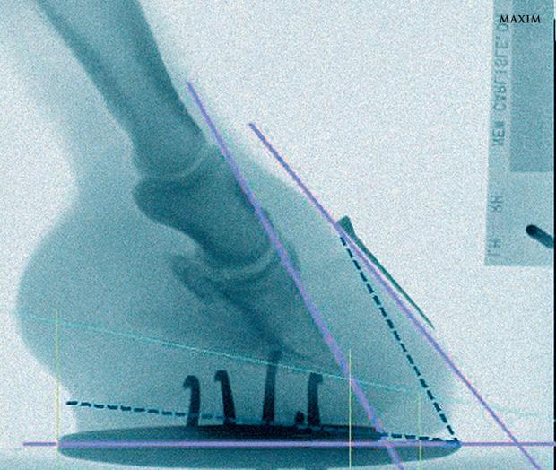 Рентген лошадиного копыта