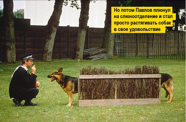 Фото №10 - 13 фото животных, которые тебя рассмешат