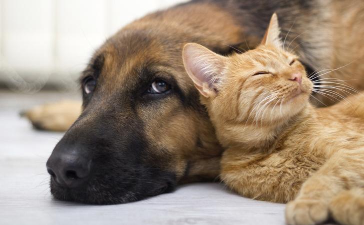 Фото №1 - Ученые всерьез взялись за переводчик с собачьего на английский