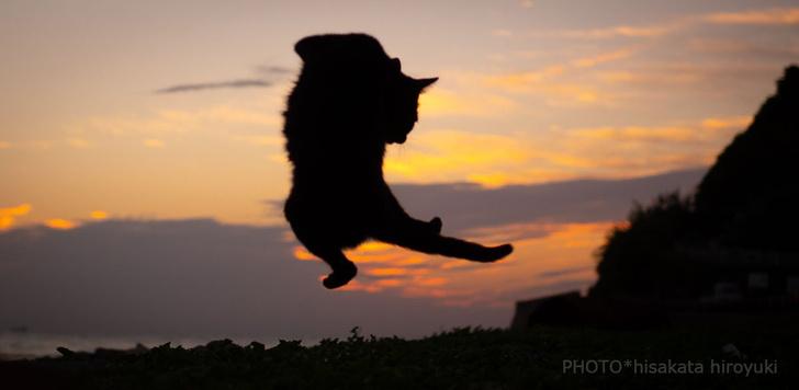 Фото №1 - Японский фотограф снимает, как коты занимаются карате (ГАЛЕРЕЯ)