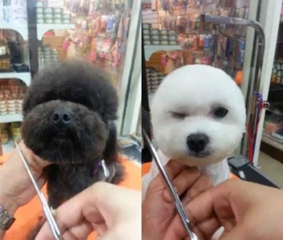 Фото №4 - Новый тренд на Тайване: геометрически правильные собаки