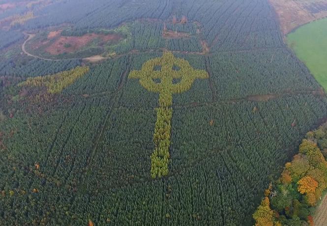 Лесник тайно вырастил кельтский крест