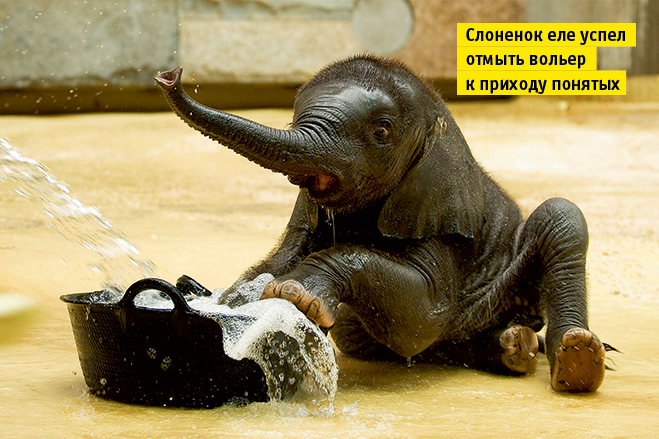 Фото №10 - Слонопотамия. 13 фотоисторий из жизни слонов