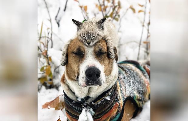 Фото №2 - Генри и Балу: «Инстаграм» о путешествиях кота и пса