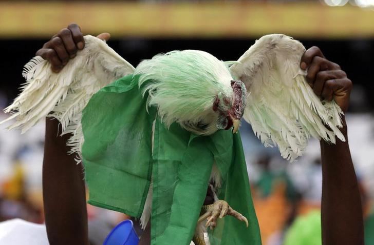 Фото №1 - Вероломное попрание прав болельщиков! Нигерийцам запрещают приносить на стадионы куриц!
