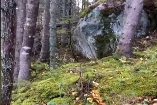Фото №1 - «Дышащий» лес сняли на видео, и выглядит это жутко и одновременно завораживающе