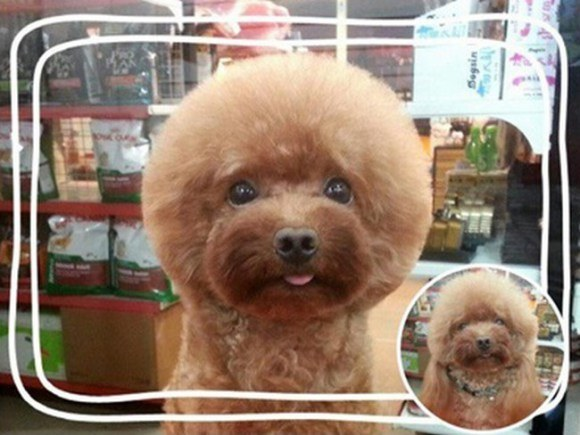 Фото №5 - Новый тренд на Тайване: геометрически правильные собаки