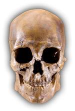 Фото №1 - Пастафарианство: мы нашли истинного бога и хотим поговорить об этом