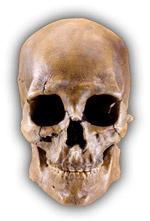 Пастафарианство: мы нашли истинного бога и хотим поговорить об этом
