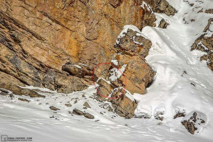 Фото №3 - Найди снежного барса на фото: новая оптическая иллюзия